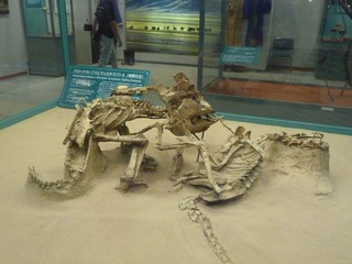 格闘状態の珍しい化石