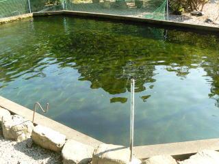 ニジマスがいっぱいの池
